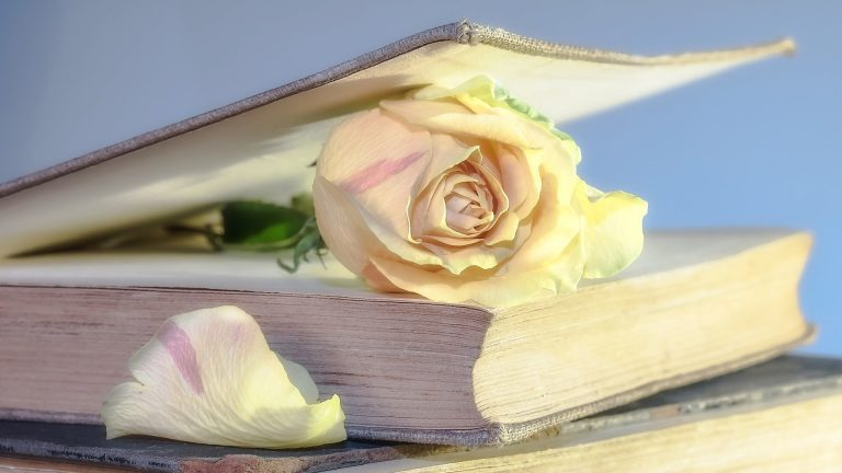bloomed rose inside book cover